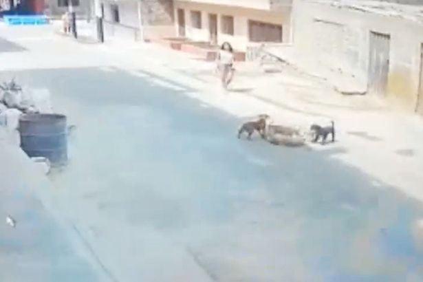 psu koga je udario automobil petface