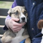 SJAJNE VESTI: U akciji udomljavanja, nove domove pronašlo pet pasa! (FOTO)