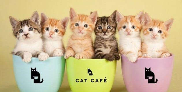 čuvanje mačaka petface