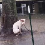 Posredstvom interneta, spašen je pas koji je ostao vezan za drvo u sred poplave!