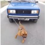 VIDEO: Aleksandar vezao psa za automobil, naterao ga da ga vuče i sve to objavio na Facebook-u!
