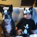 Želite da svoju porodicu upotpunite psom? Evo koje rase se preporučuju za decu!