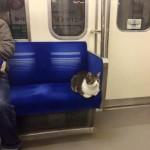 LEPOTICA: Ova mačka je atrakcija tokijske železnice!