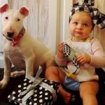 SLATKIŠI: Beba i pit bul ulepšaće vam dan! (FOTO)