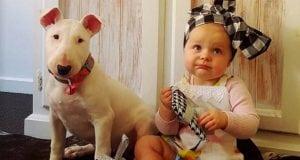 Beba i pit bul petface