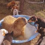 GALERIJA: Zašto sve životinje obožavaju KAPIBARU – najvećeg glodara na svetu?!