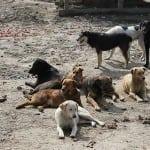 """NIŠ: """"Neodgovorni vlasnici godišnje izbace oko 1.000 životinja! HOĆEMO KAZNE""""!"""