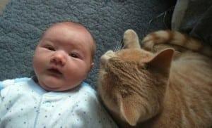 Maca Sigi petface