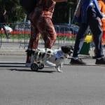 FOTO: Ovako smo se proveli na maratonu trčeći sa psima!