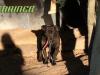 pas koji je 10 godina proveo na lancu petface