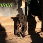 Čiko je pas koji je 10 godina proveo na lancu, a sada je konačno osetio slobodu!
