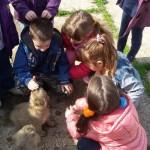BRAVO ZA VASPITAČE: Dečica iz vrtića u Zemunu posetila Prihvatilište za napuštene pse!