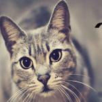 SAVETI: Kada mačke zahtevaju promene u ishrani i kako ih najbolje sprovesti?