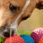 ROGZ: Najkvalitetniji i najveći izbor igračaka za vaše pse!