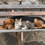 Danas je Svetski dan napuštenih životinja: UDOMI, NE KUPUJ!