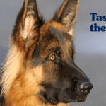 TASTE OF THE WILD: Kombinacija mesa divljih ptica namenjena je ukusu i najprobirljivijih pasa!