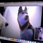 VIDEO: Pogledajte kako dva psa razgovaraju preko Skajpa!