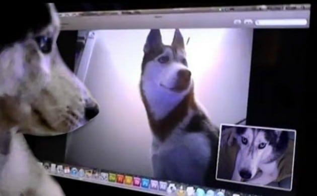dvaa psa razgovaraju petface