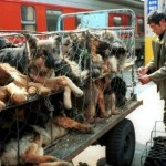 POTPIŠI PETICIJU: Kina počela pripreme za najokrutniji festival psećeg mesa!