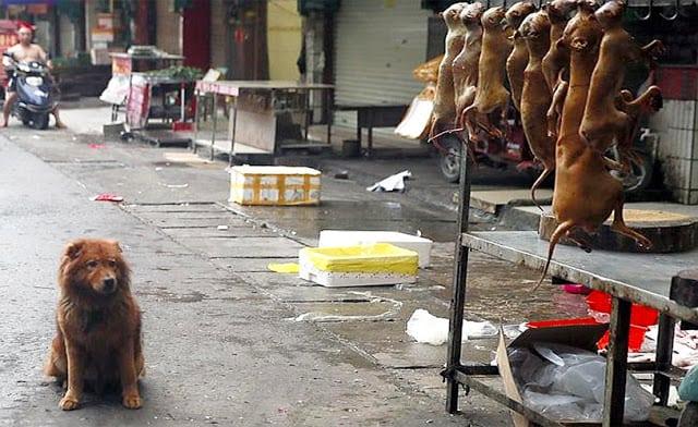 festival psećeg mesa petface