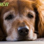 TRAINER: Sve što treba da znate o ishrani starih pasa!
