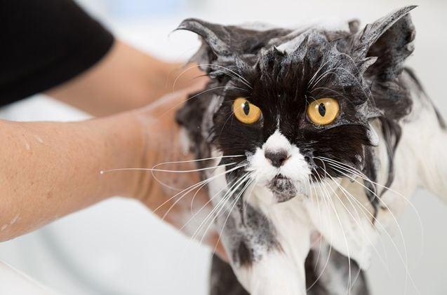kupanje petface