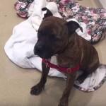 Video priča o Đusu, psu koji plače, ujedinila ljubitelje životinja!