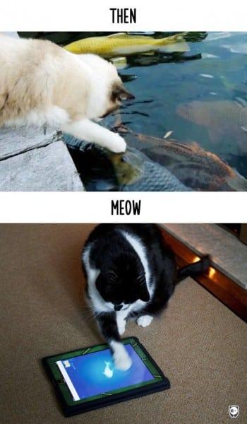 mačaka petface