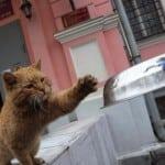 mačka zaposlena u muzeju petface