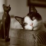 Obožavanje mačke kroz istoriju!