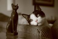 mačke petface