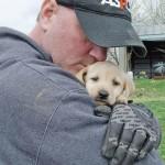 Oko 50 labradora spašeno je  iz jedne odgajivačnice gde su držani bez hrane i vode!