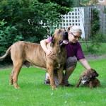 Policija u tri godine vlasnicima oduzela 4.757 takozvanih opasnih pasa!