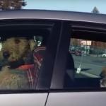 Vlasnici su ostavili svoje ljubimce u automobilu, ali ovaj pas je pronašao način da im skrene pažnju! (VIDEO)