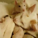 MEDENJACI: Pacov Tejt pomaže svojoj prijateljici mački da podiže svoje mladunce!