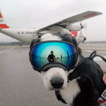 pas je zadužen za bezbednost petface
