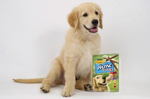 pas krije slatkiše petface