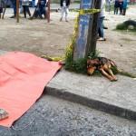 VERAN KAO PAS: Slomljenog srca pas tuguje za preminulim vlasnikom!