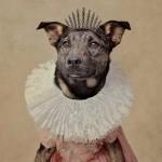 NAJLEPŠA GALERIJA IKADA: Napušteni psi poziraju za udomljavanje!
