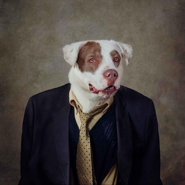 psi poziraju petface