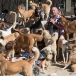 HUMANOST BEZ GRANICA: Na svom imanju ovaj čovek je izgradio smeštaj za preko 450 životinja!