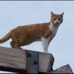Zbog spasavanja ove mačke sa stuba od 20 metara, na noge je podignut ceo grad!
