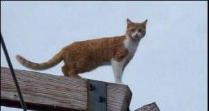 spašavanje mačke sa stuba petface