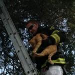 ZRENJANIN: Vatrogasci spasili mačku koja se zaglavila u oluku!