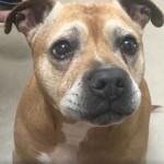 Ovaj beskućnik nije mogao da plati troškove lečenja za svog psa, a onda se desilo čudo!