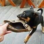 """Da li i vaš ljubimac voli da """"degustira"""" papuče?"""