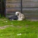 RUMUNSKI HAČIKO: I ovaj pas 5 godina čeka vlasnika se više neće vratiti!