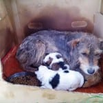 SURČIN: Kada se ujedine divni ljudi, onda pomoć bolesnom napuštenom psu ovako izgleda!
