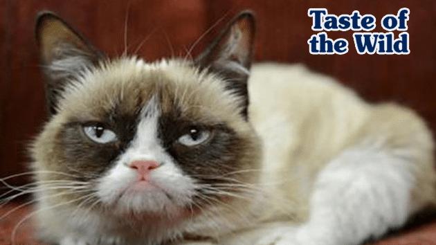 7 stvari koje vaša mačka mrzi petface