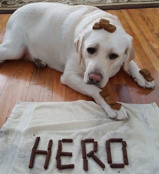 Heroj petface